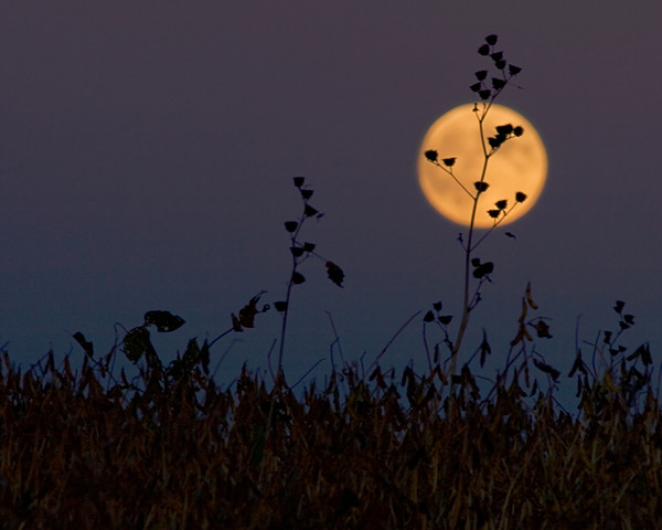 Shine on Harvest Moon Again!