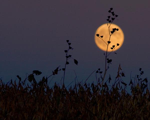 Shine on Harvest Moon Again!